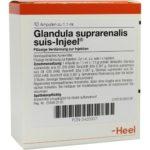 Glandula suprarenalis suis-Injeel
